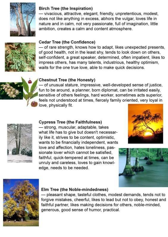 CboxTicon.com - Portal Tree2
