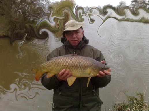 Anybody Catching? (not pike) Sycamorecarptench001-1-1