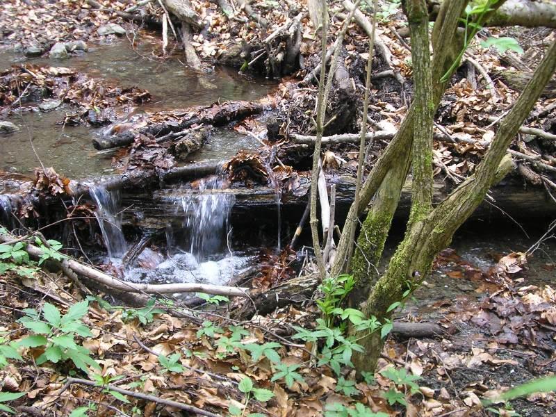 Rat, šuma, voda...... 111