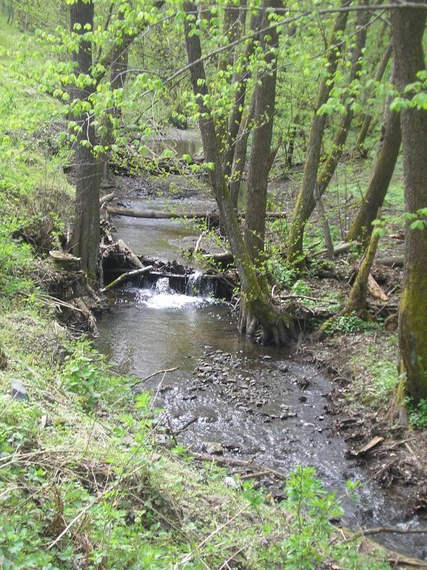 Rat, šuma, voda...... 118