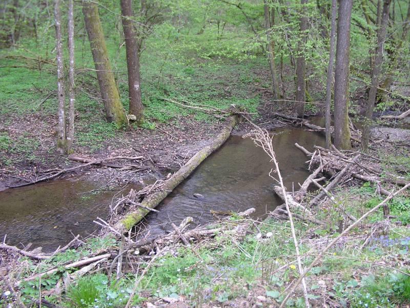Rat, šuma, voda...... 172
