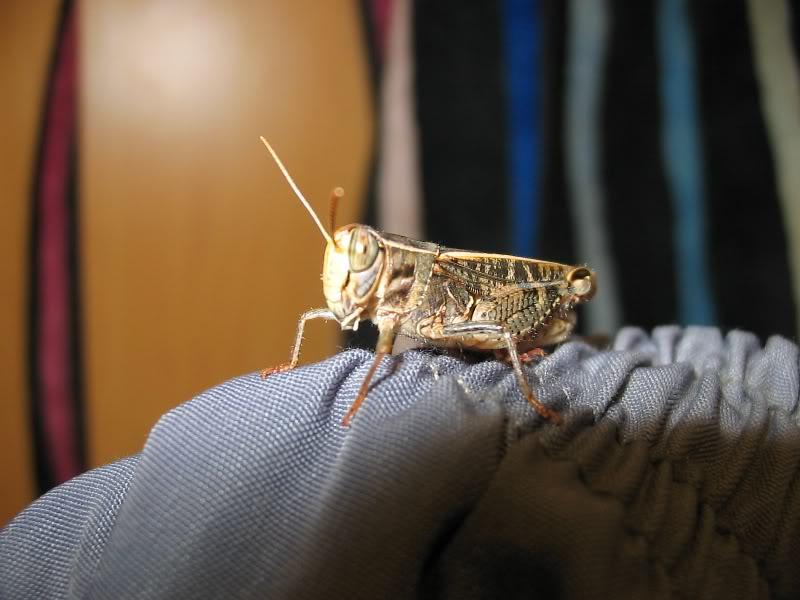 Slike insekata- buba 2019