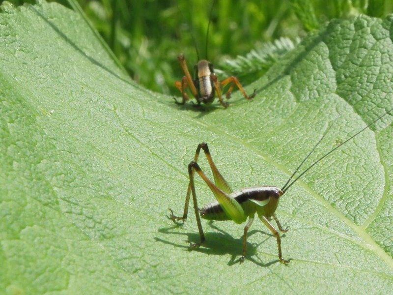 Slike insekata- buba - Page 3 255439_4067291651770_1906039020_n