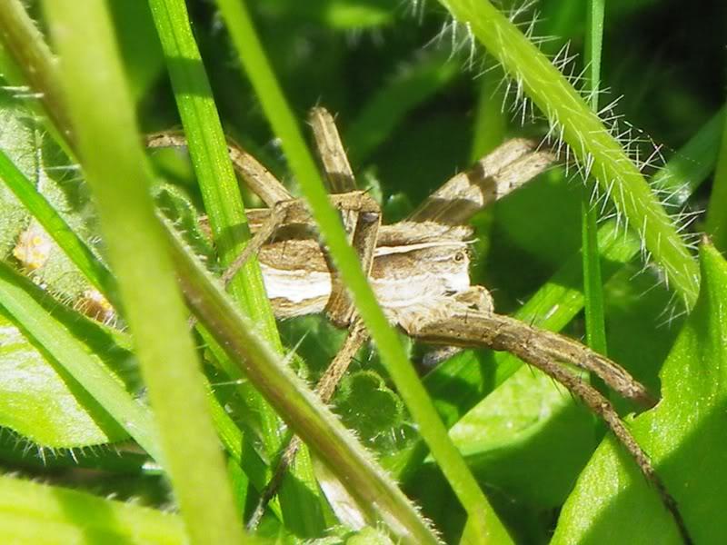 Slike insekata- buba IMGP0232