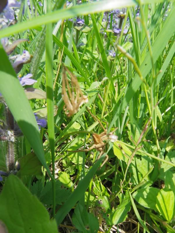 Slike insekata- buba IMGP0291