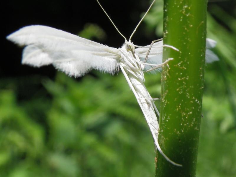 Slike insekata- buba - Page 3 IMGP5468
