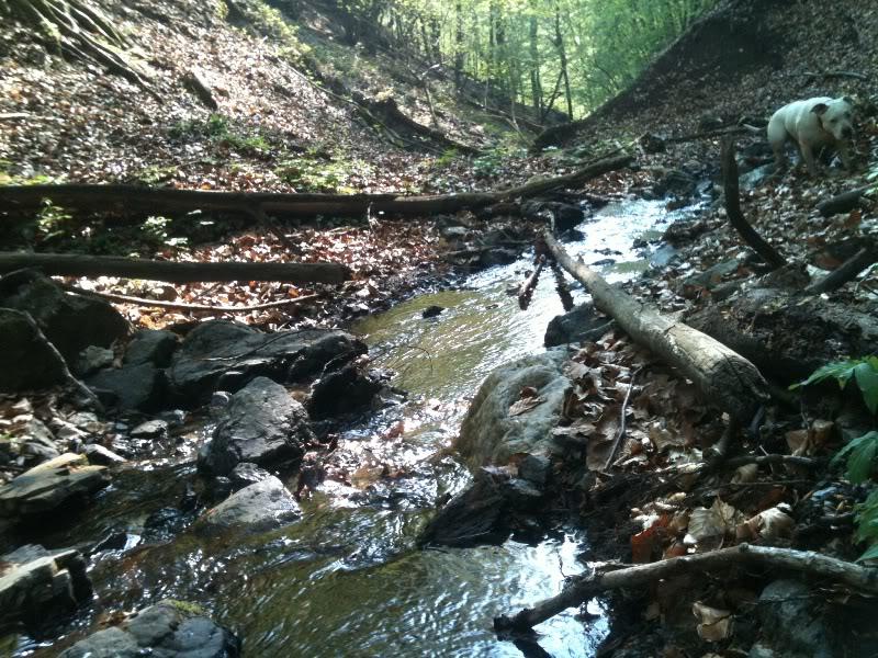 Rat, šuma, voda...... IMG_0585
