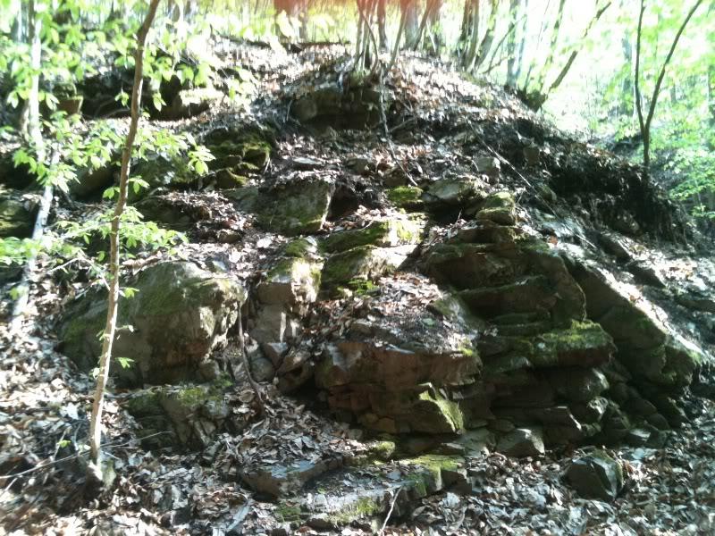 Rat, šuma, voda...... IMG_0593