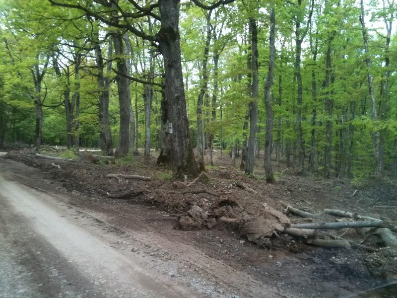Rat, šuma, voda...... IMG_0649