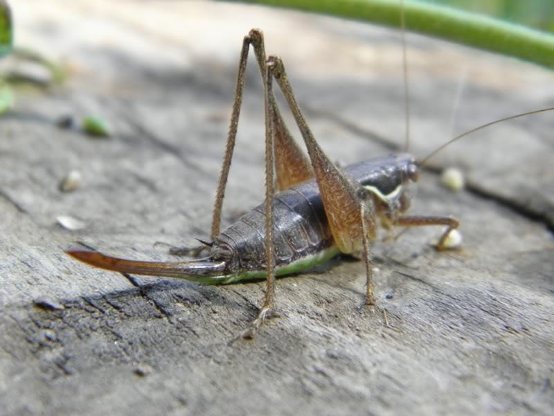 Slike insekata- buba P9220104