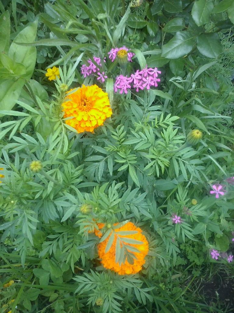 Futur jardin d'orchidées!!! - Page 4 CAM00340_zpskqvgghax