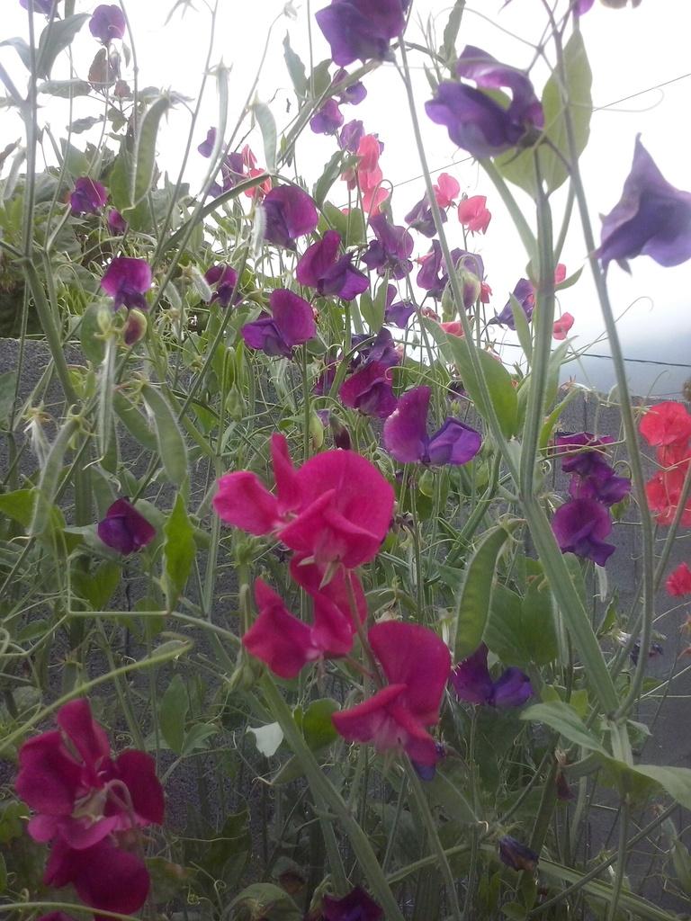 Futur jardin d'orchidées!!! - Page 4 CAM00376_zpshteo5vfy