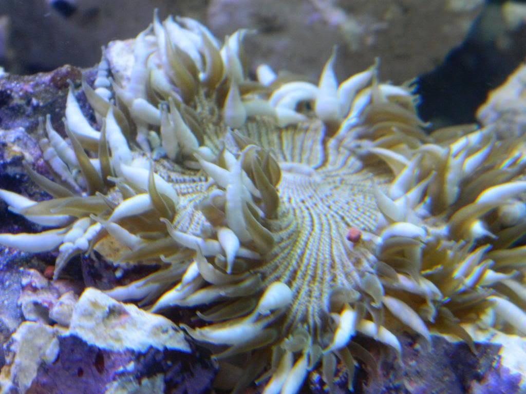 Finaly entered the salt water world.  DSCN4236