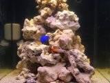 Finaly entered the salt water world.  Th_DSCN4000