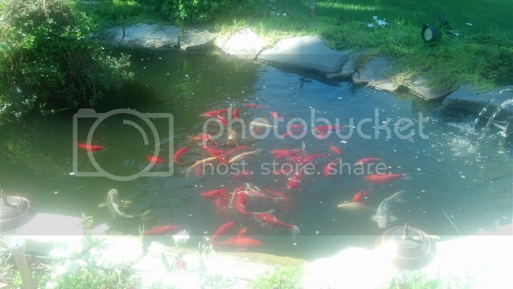 our pond today ! 7-16-14