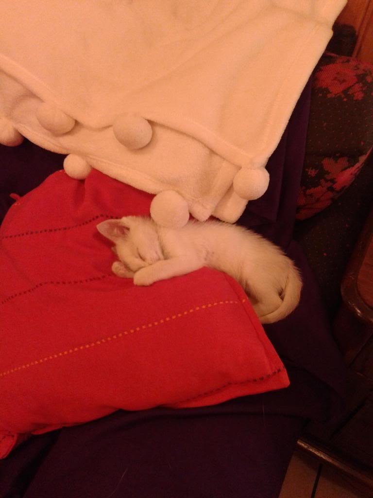 Χαρίζεται λευκή γατούλα με μπλε μάτια 1ος μήνα! Υιοθετήθηκε!!! 20140428_150321_zps5232d8f8