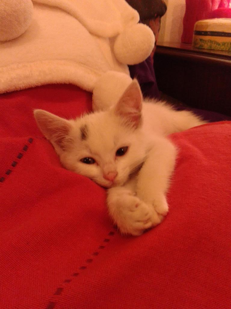 Χαρίζεται λευκή γατούλα με μπλε μάτια 1ος μήνα! Υιοθετήθηκε!!! 20140428_151757_zps718b5cec