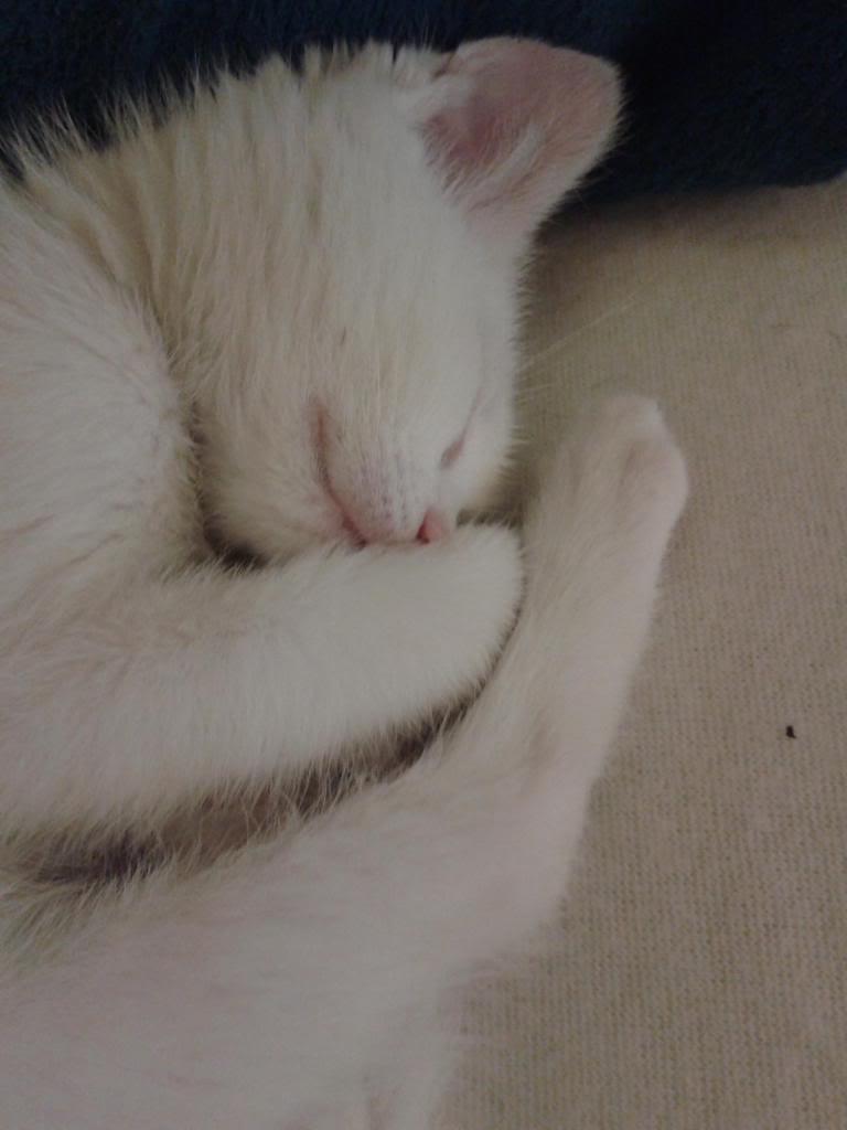 Χαρίζεται λευκή γατούλα με μπλε μάτια 1ος μήνα! Υιοθετήθηκε!!! 20140430_012356_zps4bccd897