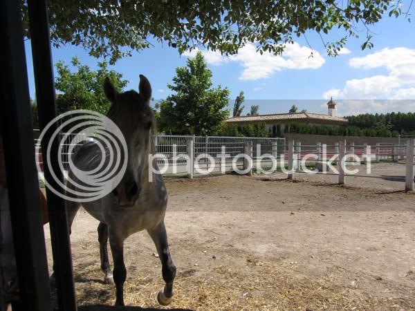Fotos de Nuestros Caballos v. XXIII - Página 29 IMG_0284