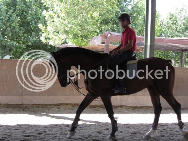Fotos de Nuestros Caballos v. XXIII - Página 29 IMG_0327
