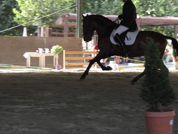 Fotos de Nuestros Caballos v. XXIV IMG_0816