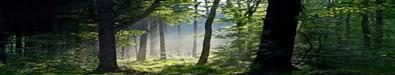 Bosque de Aard