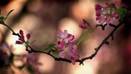 Góc nhỏ thơ Đường Luật - Page 2 Herry-blossom
