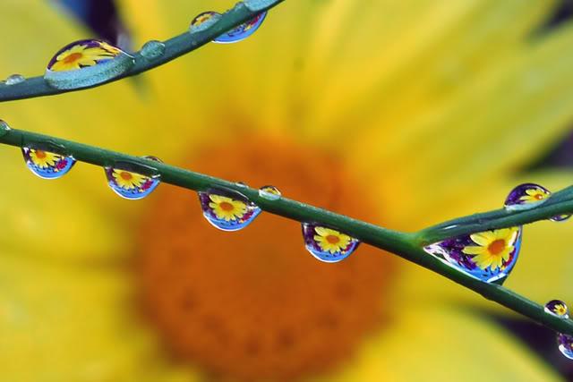 Hương Sắc Cuộc Đời - Page 2 SunflowerRaindrops-