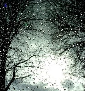 Hương Sắc Cuộc Đời - Page 2 Rain-drops