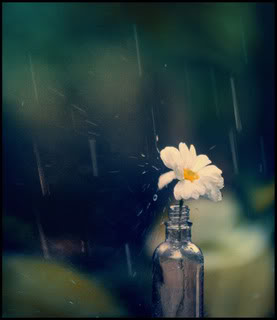 Chiếc Bóng của Giọt Nước Mắt - Page 3 Rain2