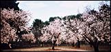 "♦ Parque ""Sakura no Komachi"""