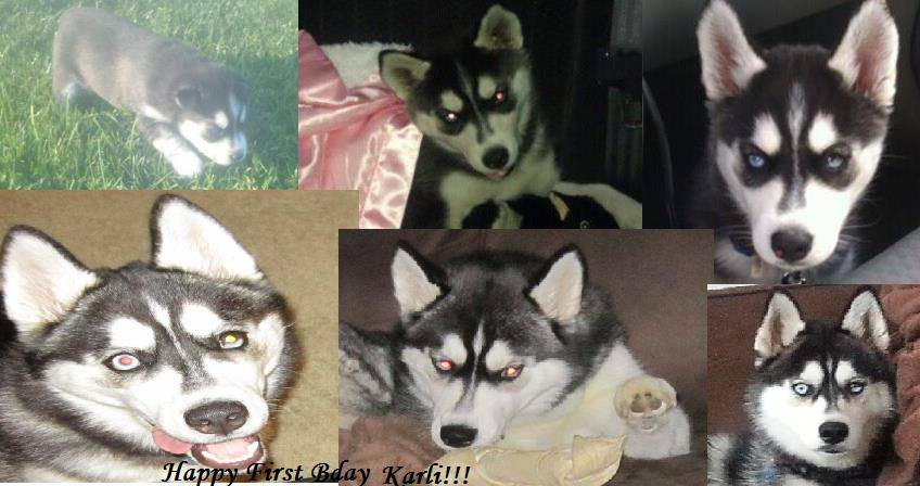 52 weeks of Karli - Page 3 1176380_10153187214340381_2052593868_n_zps8b539f1e