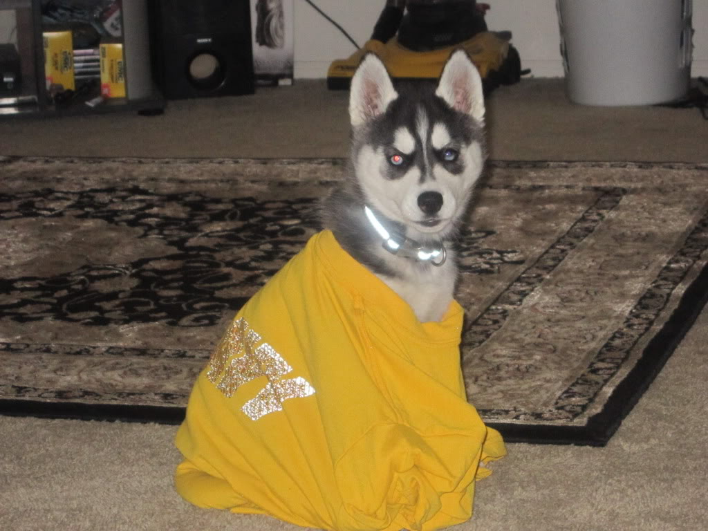 Classic Photos Of Your Huskies - Page 3 IMG_0489