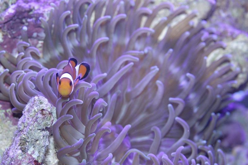 Le reef de KAZ IMG_3887_zps6d22acdd