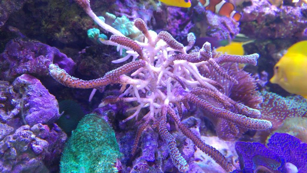 Blanchissement coraux ... 20151230_104509_zpseqjqs9fj