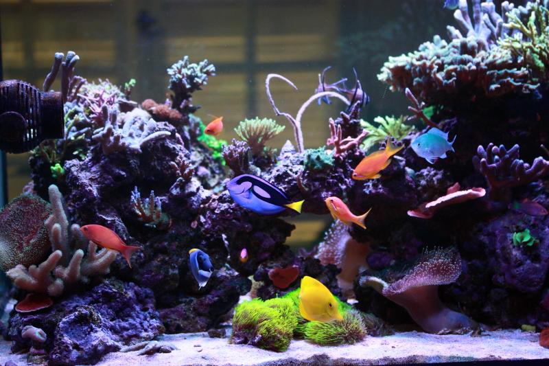 Le bac à poissons de Polaire  Bac%201_zpsxo8qdvf9