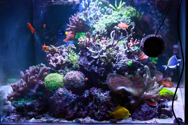 Le bac à poissons de Polaire  Bac%202b_zpstobdvtox
