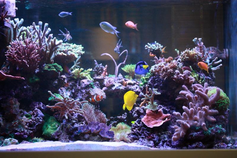 Le bac à poissons de Polaire  Bac%204b_zpssxky6clg