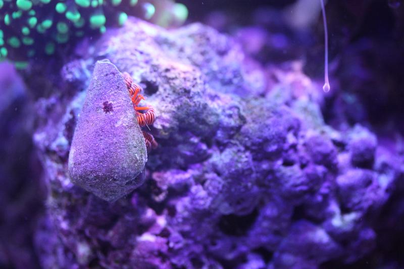 Le bac à poissons de Polaire  Photo%203_zpsohxftrnq