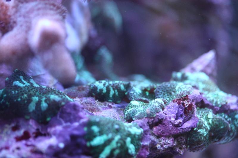 Le bac à poissons de Polaire  Photo%204_zpsnbaobjer