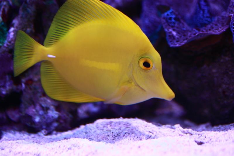 Le bac à poissons de Polaire  Photo%206_zpskngwcdjf