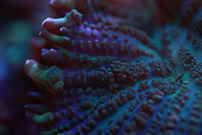 Le bac à poissons de Polaire  Photo%209_zpsbkxo9ptl