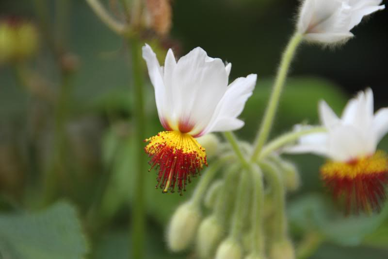 Jardin Botanique de Hanbury IMG_8965_zps81fd75fe