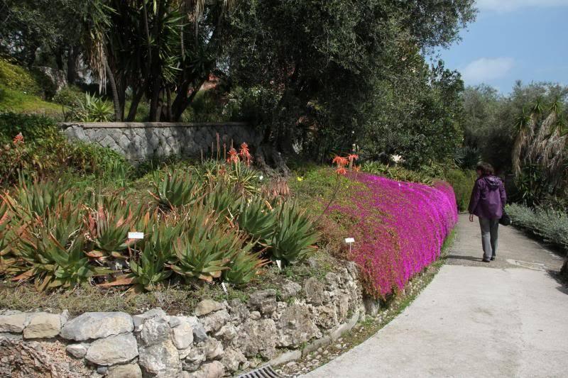 Jardin Botanique de Hanbury IMG_8971_zpsc4986314