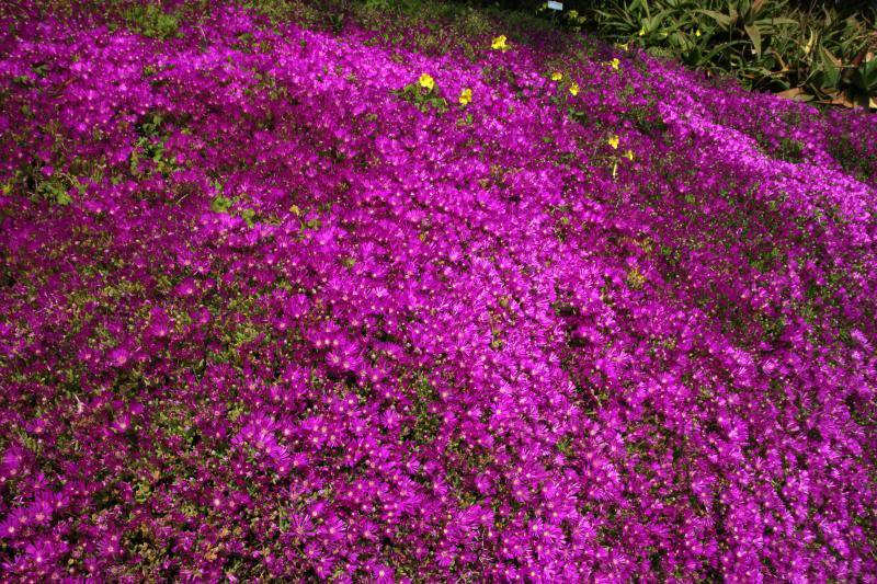 Jardin Botanique de Hanbury IMG_8972_zpsfd5b3258