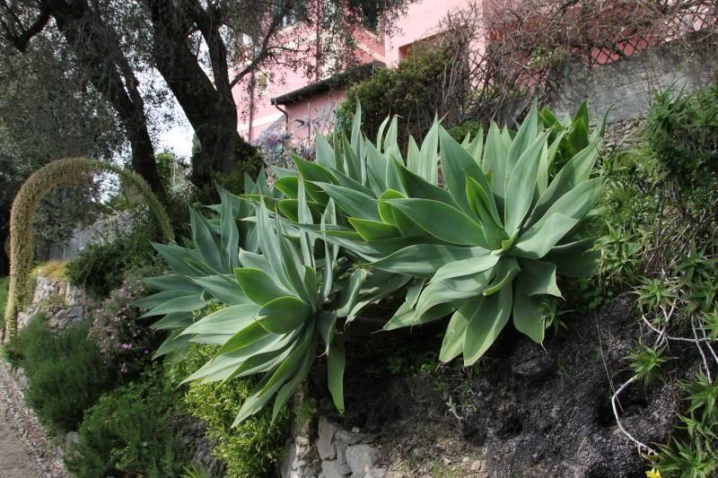 Jardin Botanique de Hanbury IMG_8975_zps7f854199