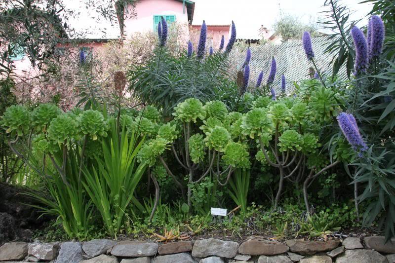 Jardin Botanique de Hanbury IMG_8976_zps81733733