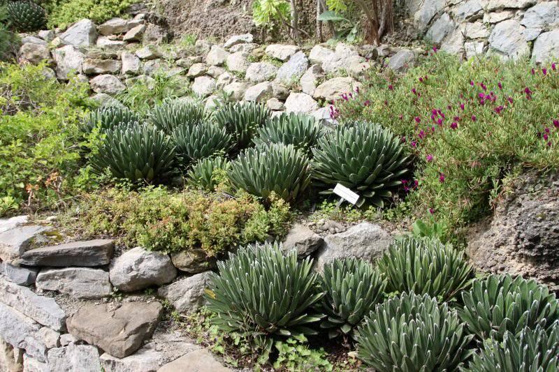 Jardin Botanique de Hanbury IMG_8984_zpsb2bb523a
