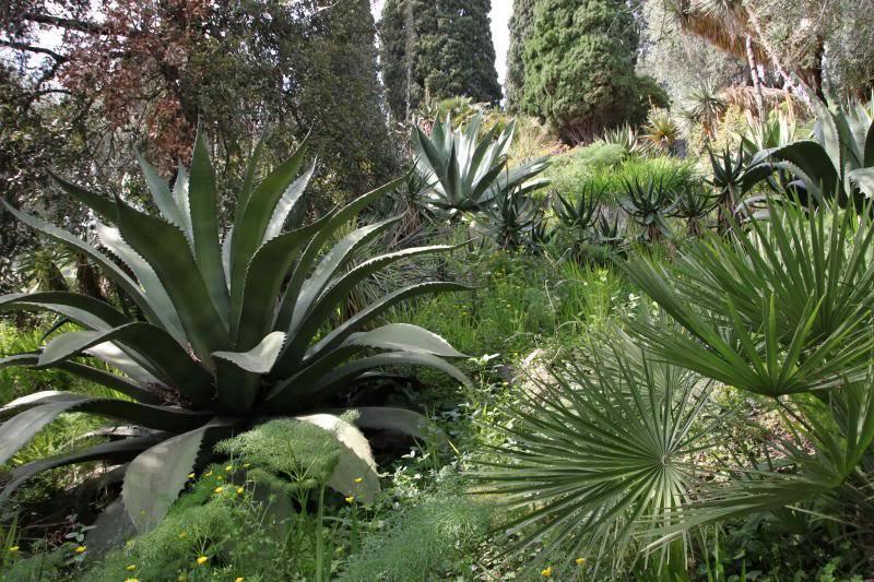 Jardin Botanique de Hanbury IMG_8988_zps208d8c41