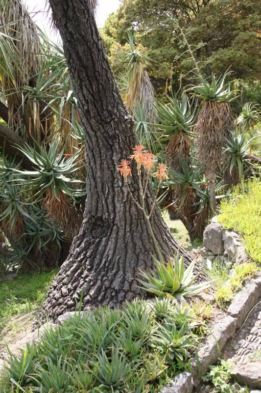 Jardin Botanique de Hanbury IMG_8993_zps16c0e4a1